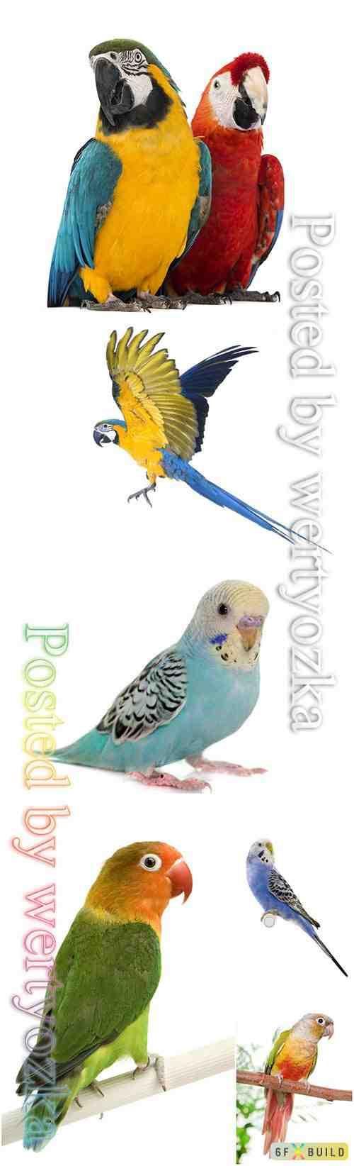 Parrots beautiful stock photo