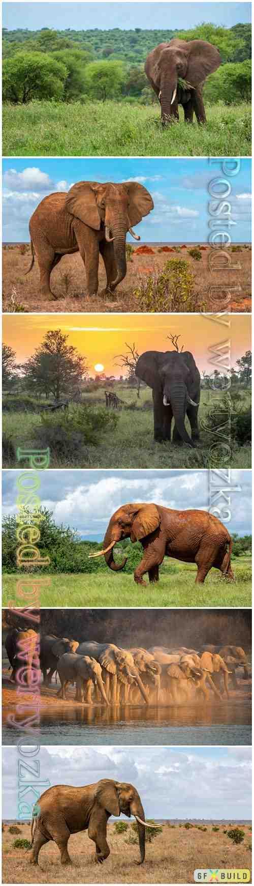 Elephant beautiful stock photo