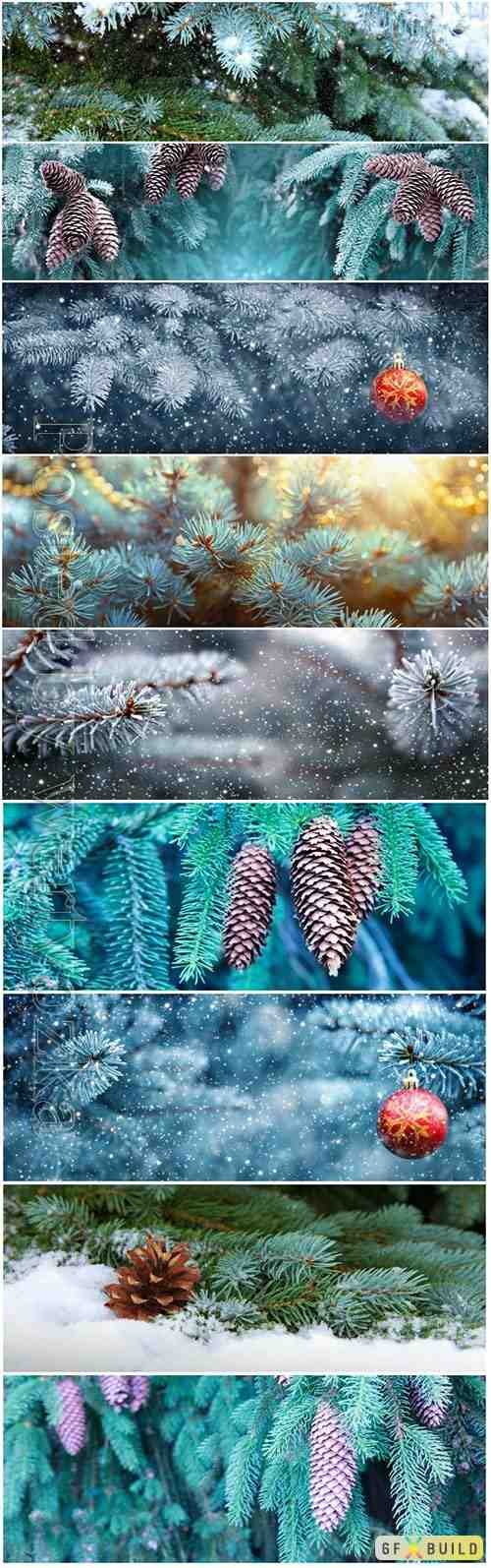Background of Christmas tree branches with big fir cones