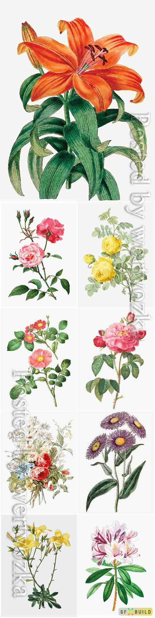Beautiful blooming different flowers vector set