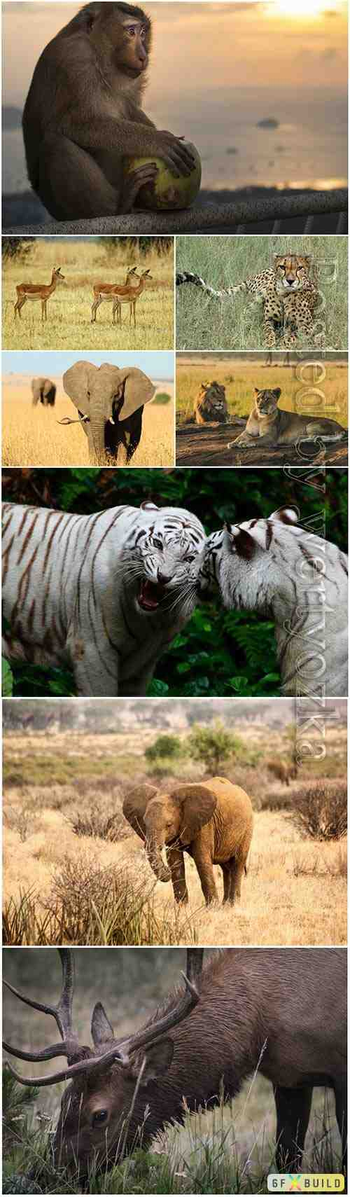 Animals in nature, tiger, elephant, leopard, monkey