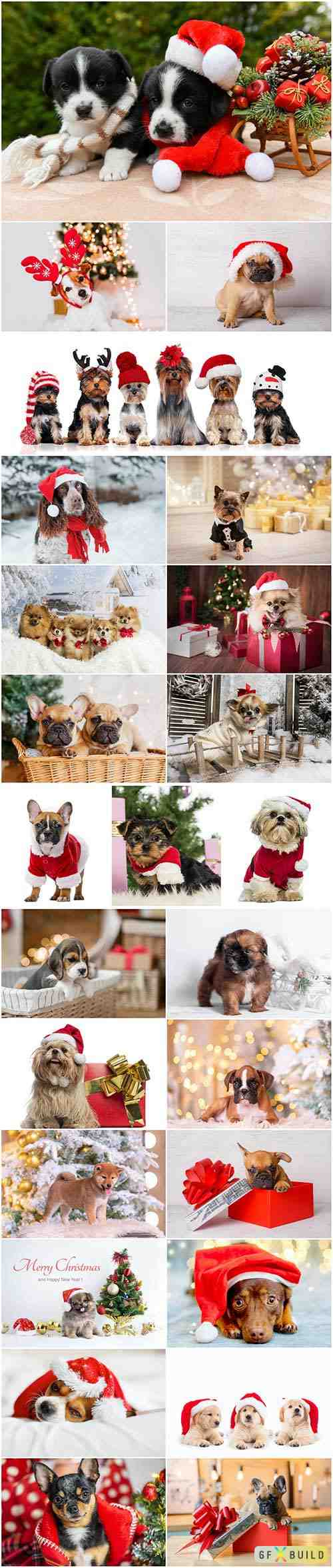 Cute dogs in santa hat set stock photo