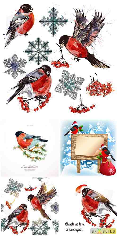 Winter, birds, bullfinches, vector