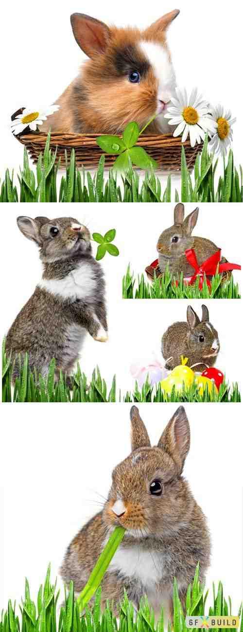 Rabbits on white background stock photo